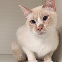 Adopt A Pet :: Simon - San Leon, TX