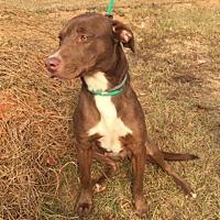 Adopt A Pet :: Ben - Hamilton, GA