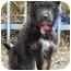 Photo 1 - Terrier (Unknown Type, Medium) Mix Puppy for adoption in Los Angeles, California - Gracie von Kern