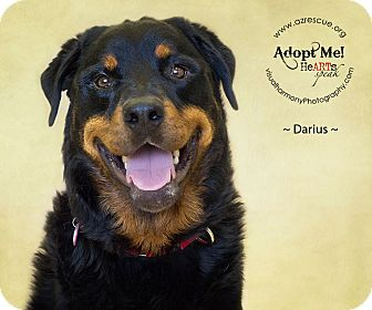 Rottweiler Dog for adoption in Phoenix, Arizona - Darius
