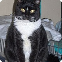 Adopt A Pet :: Jazzy - Middletown, CT