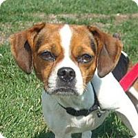 Adopt A Pet :: Maggie - Windsor, MO