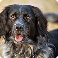 Adopt A Pet :: Fisher - Alexandria, VA