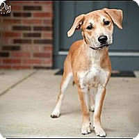 Adopt A Pet :: Lacey - Hilliard, OH