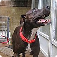 Adopt A Pet :: Minnie - Lakeville, MA