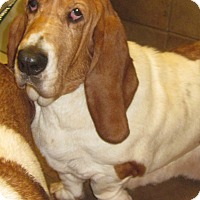Adopt A Pet :: Isabella - Barrington, IL