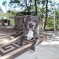 Adopt A Pet :: Bodhi - Mission Viejo, CA