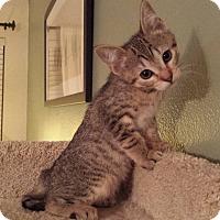 Adopt A Pet :: Alleria - Irvine, CA