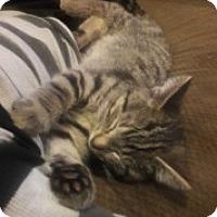 Adopt A Pet :: Speedy - McHenry, IL