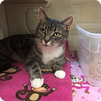 Adopt A Pet :: 1705-1201 Bradley - Virginia Beach, VA