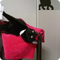 Adopt A Pet :: Sylvia - Libby, MT