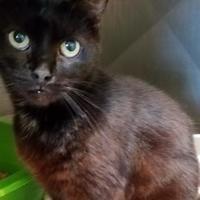 Adopt A Pet :: Astapor - Calais, ME