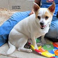 Adopt A Pet :: Buck - Lindsay, CA