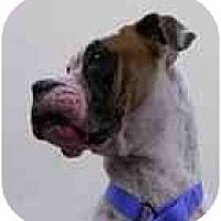 Adopt A Pet :: Dakota - Thomasville, GA