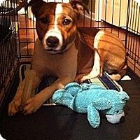 Adopt A Pet :: Ava - Nashville, TN