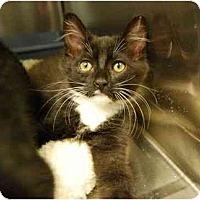 Adopt A Pet :: Link - Modesto, CA