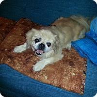 Adopt A Pet :: Oscar - Richmond, VA