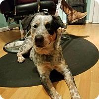 Adopt A Pet :: Stevie Nix H - Olympia, WA