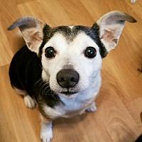 Adopt A Pet :: Clyde - Durham, NC