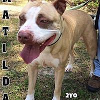 Adopt A Pet :: Matilda - Jackson, NJ