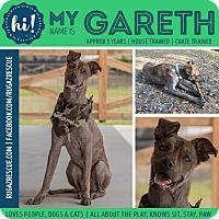 Adopt A Pet :: Gareth - New Port Richey, FL