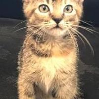 Adopt A Pet :: Elise - Columbia, SC