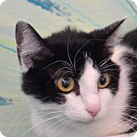 Adopt A Pet :: Baby - Englewood, FL