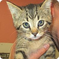 Adopt A Pet :: Otto - Reeds Spring, MO