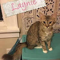 Adopt A Pet :: Laynie - South Bend, IN
