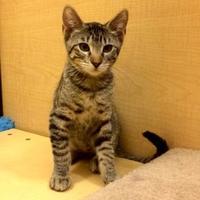 Adopt A Pet :: Ranger 4 - Bulverde, TX