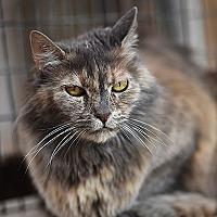 Adopt A Pet :: Elizabeth - Kanab, UT