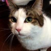 Adopt A Pet :: Sizzy - Blair, WI