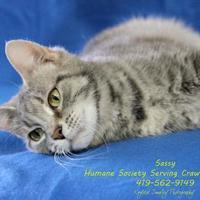 Adopt A Pet :: SASSY - Bucyrus, OH