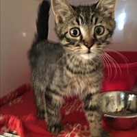 Adopt A Pet :: Mark - Wenatchee, WA
