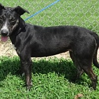 Adopt A Pet :: Gabby - Olive Branch, MS