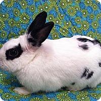 Adopt A Pet :: Maribelle - Williston, FL