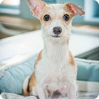 Adopt A Pet :: Lucas - New York, NY