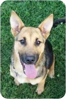 German Shepherd Dog Mix Puppy for adoption in Inman, South Carolina - Hannah