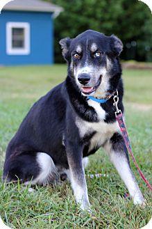 Husky Mix Dog for adoption in Waldorf, Maryland - Kentucky