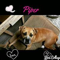 Adopt A Pet :: Piper - Dana Point, CA