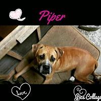 Adopt A Pet :: Piper - Dana Point, CA
