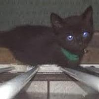 Adopt A Pet :: Sarina - Woodland Hills, CA