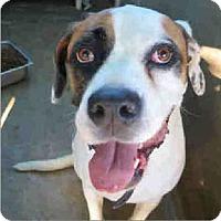 Adopt A Pet :: Roxy - Inland Empire, CA