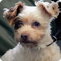 Adopt A Pet :: Wilson - Long Beach, NY