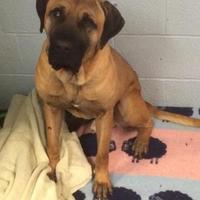 Adopt A Pet :: Major Tom - East Smithfield, PA