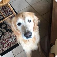 Adopt A Pet :: Amos #0608 - Fort Worth, TX