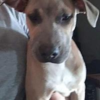 Adopt A Pet :: Queen - Phoenix, AZ