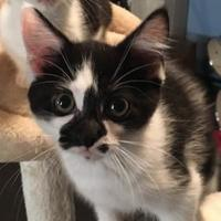 Adopt A Pet :: Monroe - Warren, MI