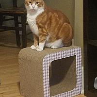 Adopt A Pet :: Paws - St Paul, MN