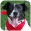 Photo 1 - Feist/Rat Terrier Mix Dog for adoption in Olive Branch, Mississippi - Cee Cee